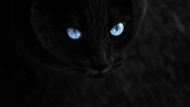 Суеверия в трейдинге: допустимый способ прогнозирования